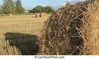straw bale roll - straw bales move in wind in agriculture...