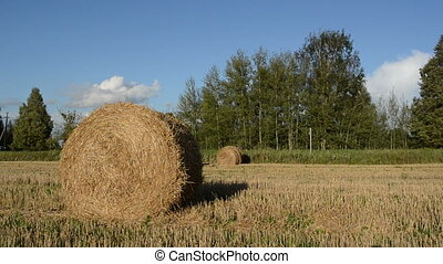 straw bale roll - straw bales rolls in agriculture field and...