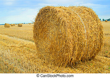 Straw bales - Field with straw bales, agriculture, concept