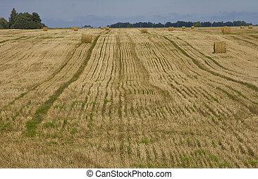 Straw bales in a field
