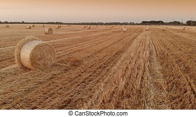 Straw bales on field - Twisted haystack on agriculture field...