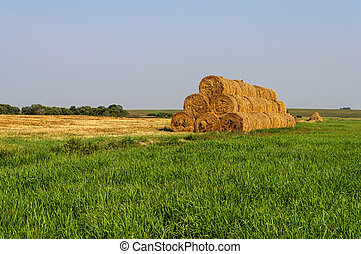 Straw bales stacked in the field