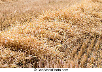Straw - Field after harvest