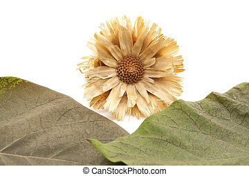 Straw flower with plant leaves