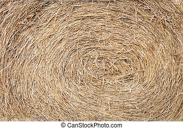 straw from rice a background