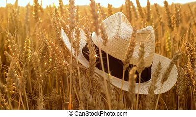 straw hat on cereal field of ripe wheat - nature, summer,...