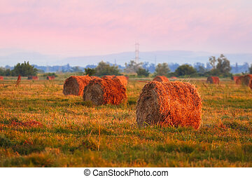 Straw Haystacks on the field after harvesting at sunset