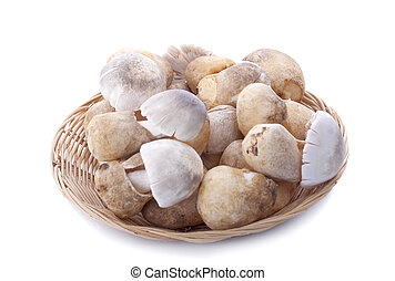 Straw mushrooms isolated on white background .