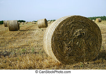 Straw on the field