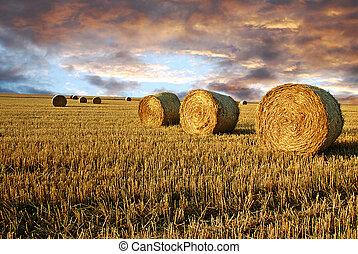 Straw rolls and dramatic sky