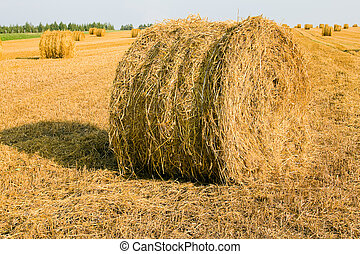 Straw which is assembled by a combine in bales