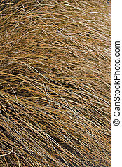 Straw texture - A straw texture makes a great background