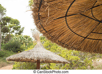 Straw umbrellas on the beach in Palma de Mallorca, Close-up against trees