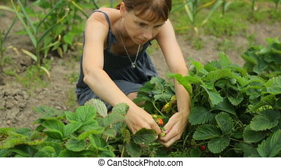 strawberries, женщина, сад, picking