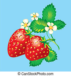 Strawberries, editable vector illustration