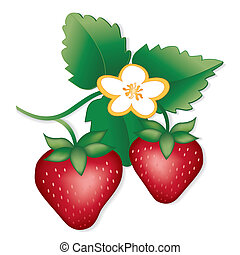 Strawberries - Fresh, natural garden strawberries, flowers....