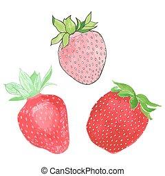 Strawberries. Hand-drawn berries. Real watercolor drawing. Vector illustration.