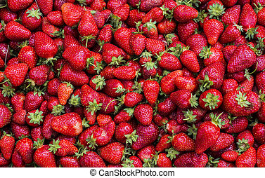 Strawberries in a basket just picked up from a field