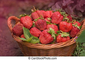 Strawberries in a basket on the field