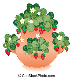 Strawberries in Clay Strawberry Jar - Red Strawberries in...