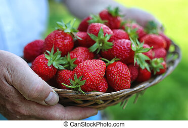 strawberries in his outstretched hand