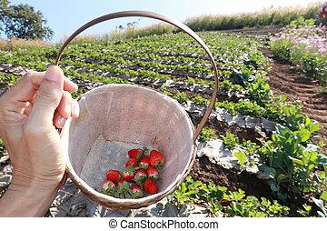 Strawberries in the basket 2