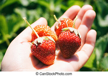 Strawberries on a hand closeup