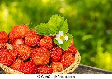 strawberries on a bench natural background