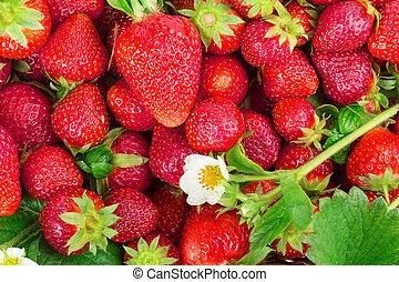 strawberries - ripe strawberries isolated on white...