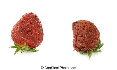 Strawberries - Timelapse of strawberries rotting over white...