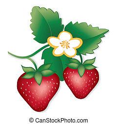Strawberries - Fresh, natural garden strawberries, flowers....