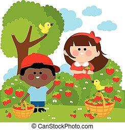 strawberries., vybírání, vektor, děti, ilustrace