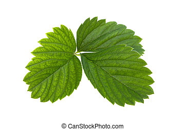 strawberry branch with green leaves on a white background