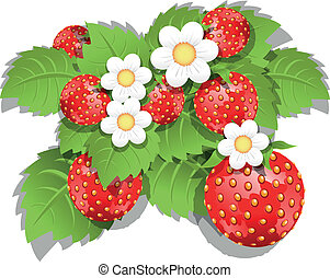 strawberry bush - illustration of a green bush with red...