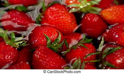 Strawberry in water and planting, growing and harvesting .....
