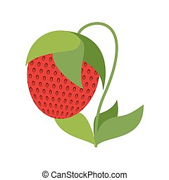 Strawberry on bush isolated. Red berries on white background