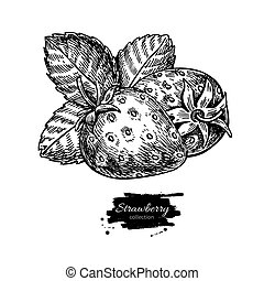 Strawberry vector drawing. Isolated hand drawn berry and leaf on