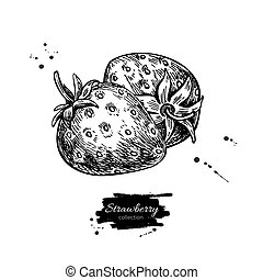 Strawberry vector drawing. Isolated hand drawn berry on white ba