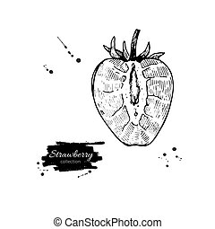 Strawberry vector drawing. Isolated hand drawn berry slice on wh