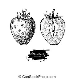 Strawberry vector drawing set. Isolated hand drawn berry on whit
