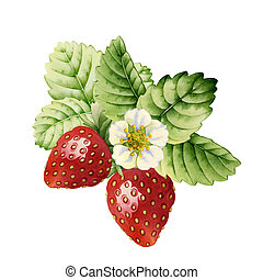 Strawberry. Watercolor - Strawberry made with watercolors on...
