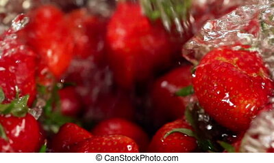 Strawberry watering. Close up of crop in water. - Strawberry...