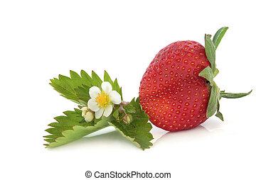 Strawberry with Flower Leaf Sprig