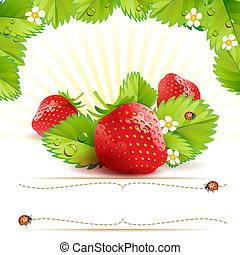 Strawberry with leafs and label with ladybug