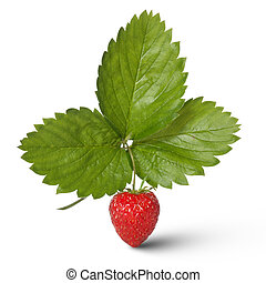 Strawberry with leaves isolated on white