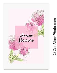 Strawflower vector illustration hand drawn painted watercolor