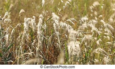 Straws in the field