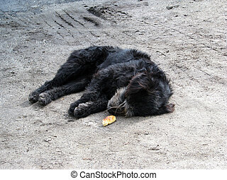 Abused dog laying on the ground next to a piece of bread