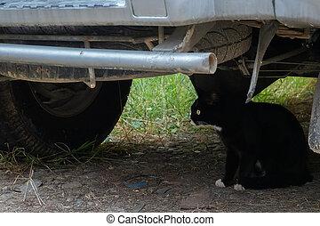 stray black cat under a car