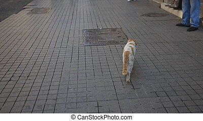 Stray cat and people over the street - Following street cat...